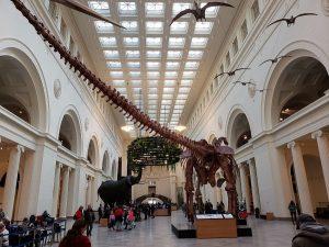 Maximo the Titanosaur