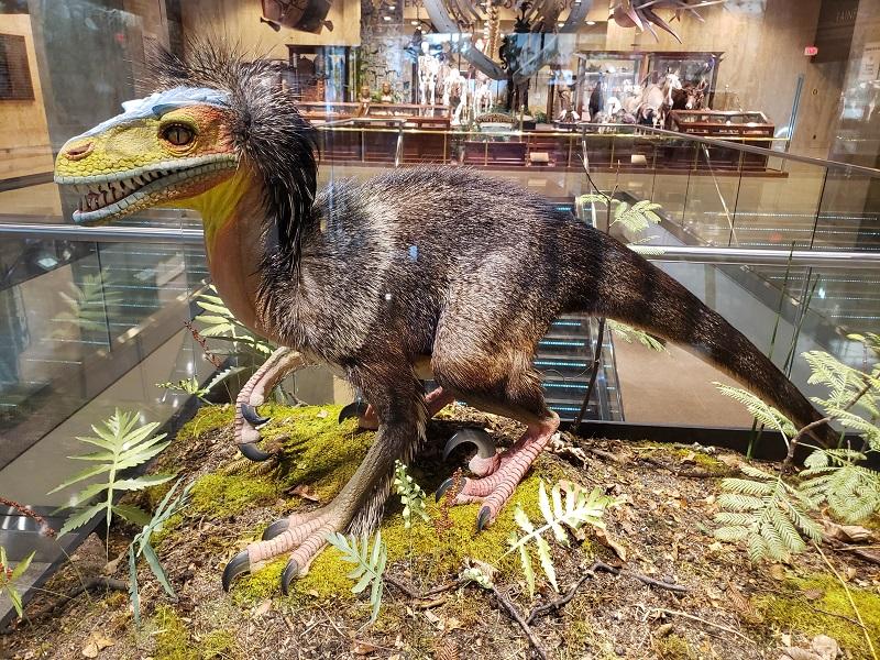 Dromaeosaur - A feathered Dinosaur?